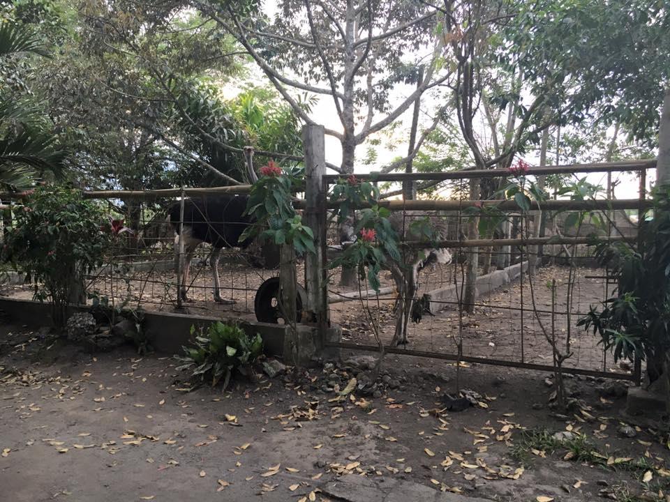 durian-garden8